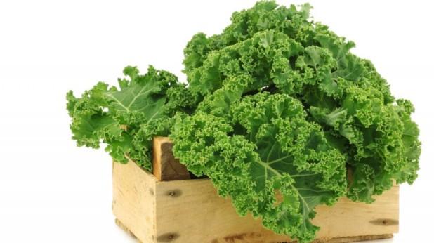 Kale1-800x449.jpg
